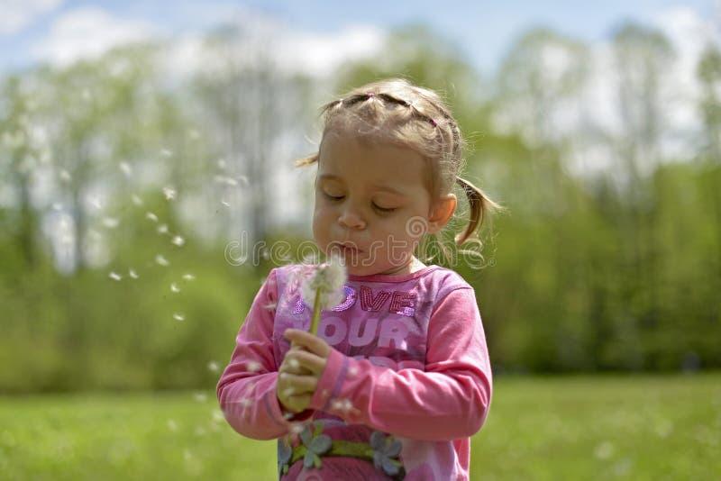 Mała dziewczynka dmucha mocno na białym dandelion obrazy royalty free