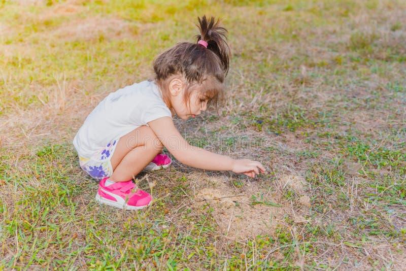 Mała dziewczynka dotyka małe mrówki z ona palcowa na mrówki hil obrazy royalty free