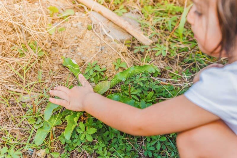 Mała dziewczynka dotyka różne zielone rośliny typ obraz royalty free