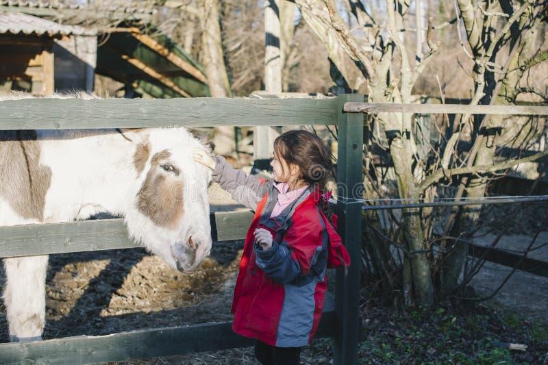 Mała dziewczynka karesów osła stawiać jej przewodzi daleko ogrodzenie obraz stock
