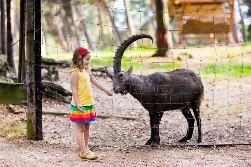 Mała dziewczynka karmi dzikiej kózki przy zoo obrazy royalty free
