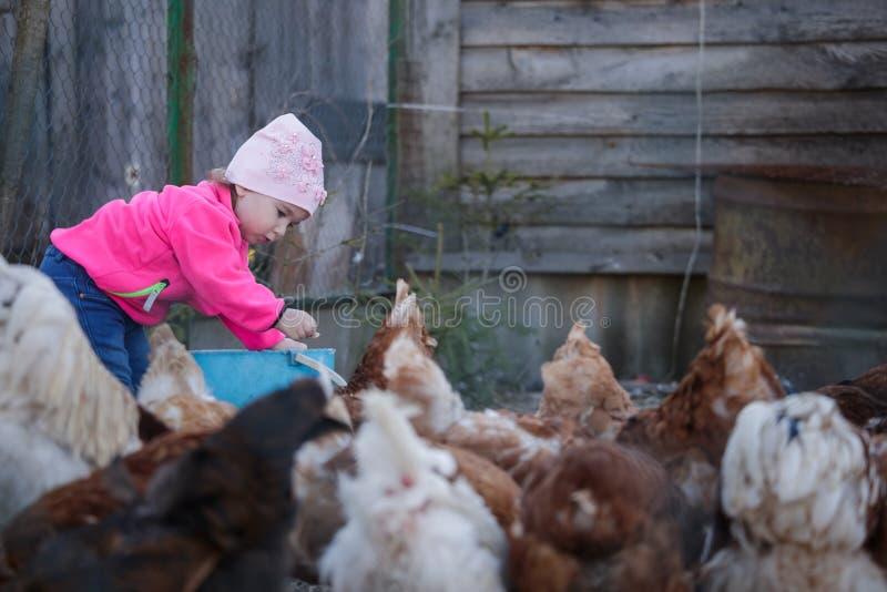 Mała dziewczynka karmi karmazynki w kurczak klatce zdjęcia stock