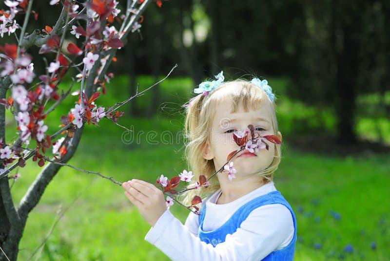 Mała dziewczynka na zielonej trawie w wiośnie z kwiatonośnym drzewem zdjęcia royalty free