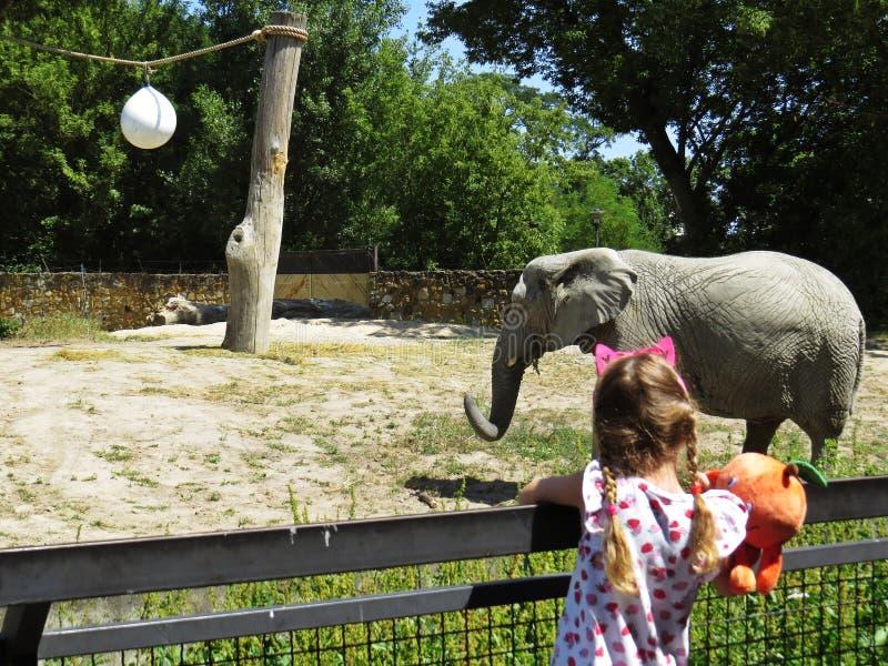 Mała Dziewczynka Patrzeje Ogromnego Pięknego słonia i Podziwia fotografia royalty free