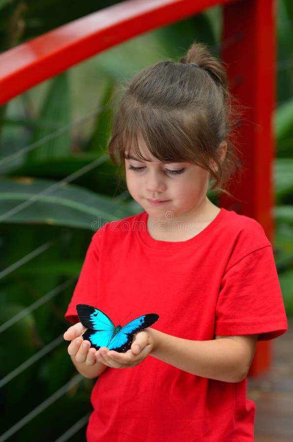 Mała dziewczynka trzyma Ulysses Swallowtail zdjęcia royalty free