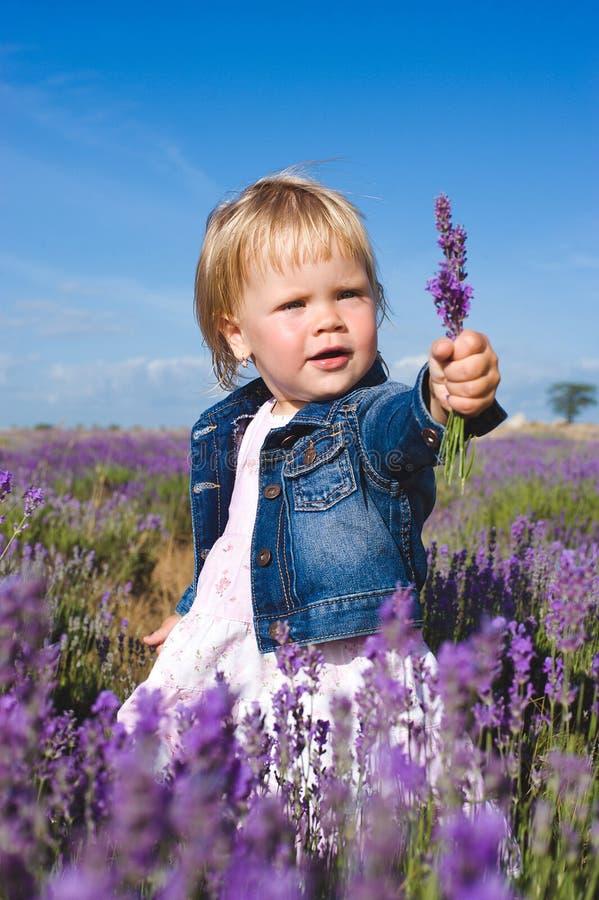 Mała dziewczynka w lawendy polu obrazy stock