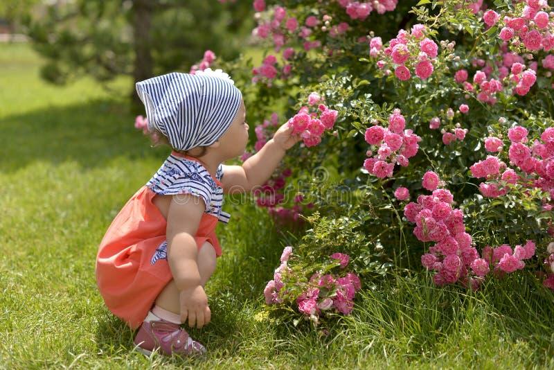 Mała dziewczynka w odprowadzeniu w ogródzie, obwąchanie różowe róże obraz stock
