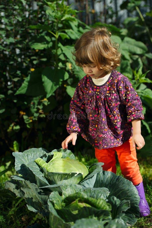 Download Mała Dziewczynka W Ogródzie Z Kapustą Zdjęcie Stock - Obraz złożonej z jeden, dziewczyna: 57670202