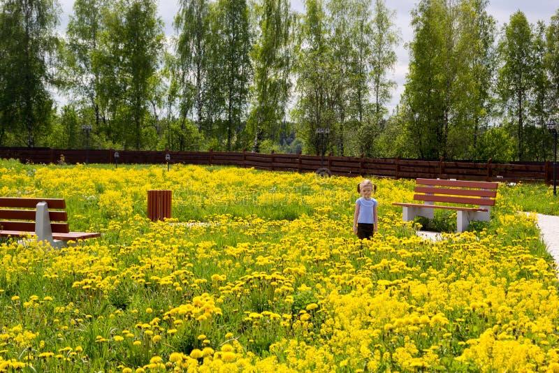 Mała dziewczynka w parku przerastającym z dandelions zdjęcie royalty free