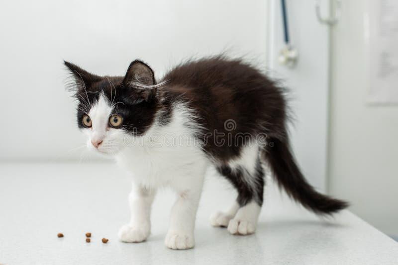 Mała figlarka przy weterynaryjną kliniką Lekarka i kot zdjęcia royalty free