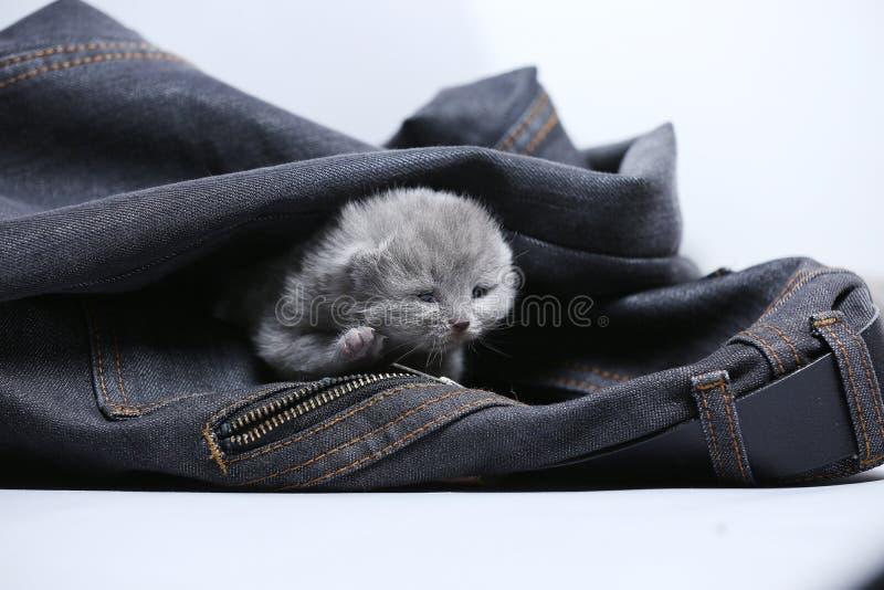 Mała figlarka w cajg kieszeni obraz stock