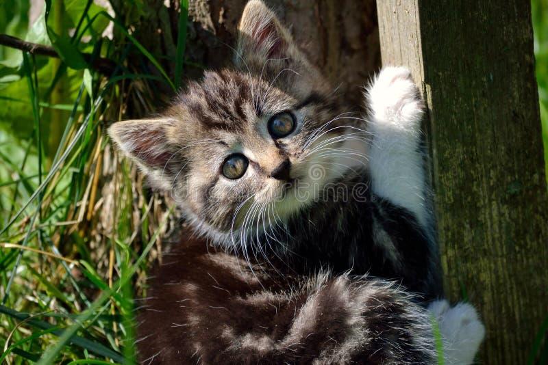 Mała figlarka w ogródzie zdjęcia stock