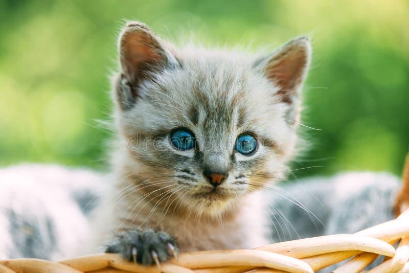 Mała figlarka z błękitnymi ayes w koszu obrazy royalty free