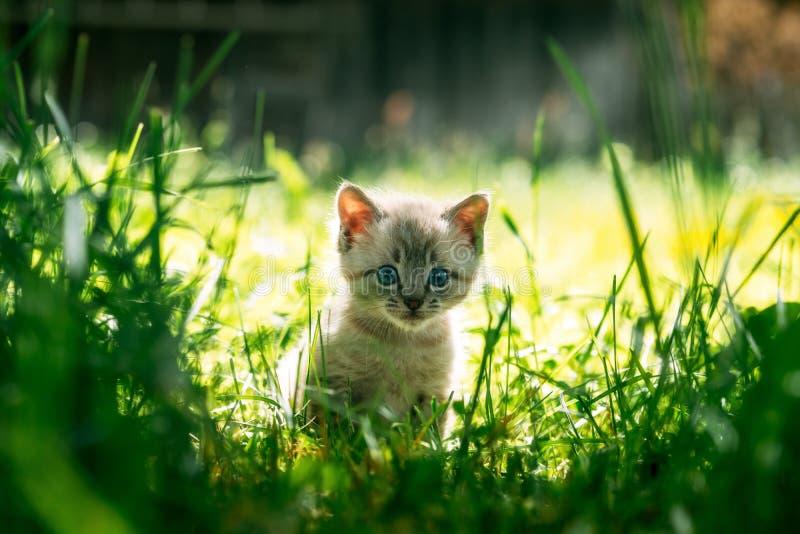 Mała figlarka z błękitnymi ayes w zielonej trawie obraz royalty free