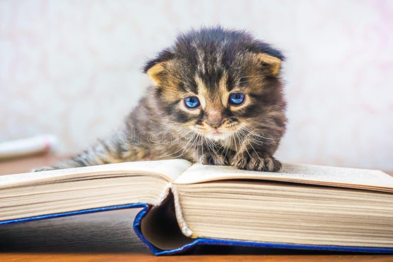Mała figlarka z niebieskimi oczami blisko wyjawionej książki Uczeń obrazy royalty free