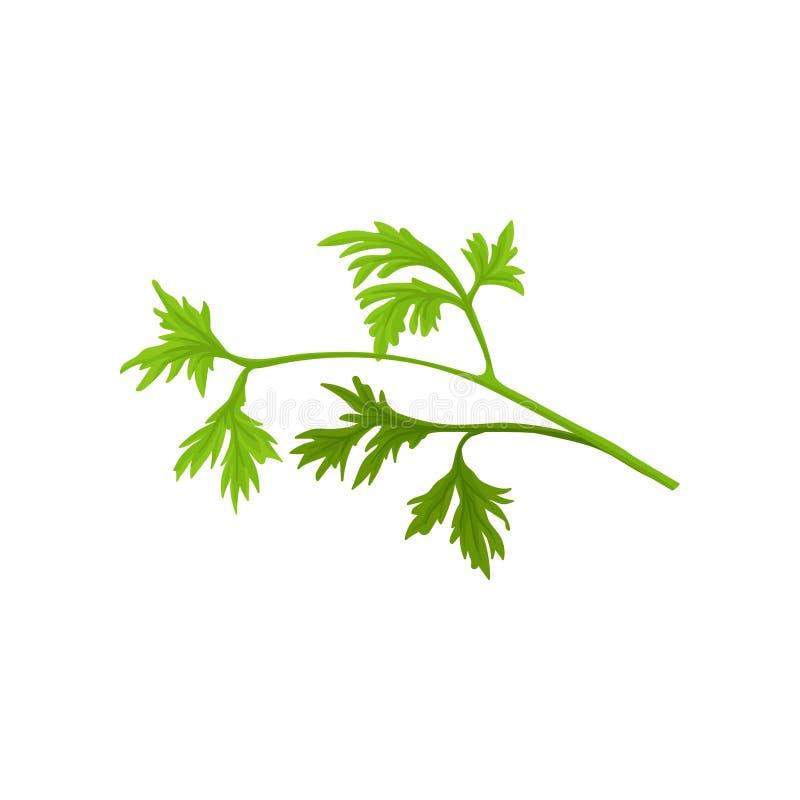 Mała gałąź świeża pietruszka z jaskrawym - zieleń opuszcza aromatyczna roślina Płaska wektorowa ikona kulinarny ziele naturalny ilustracji
