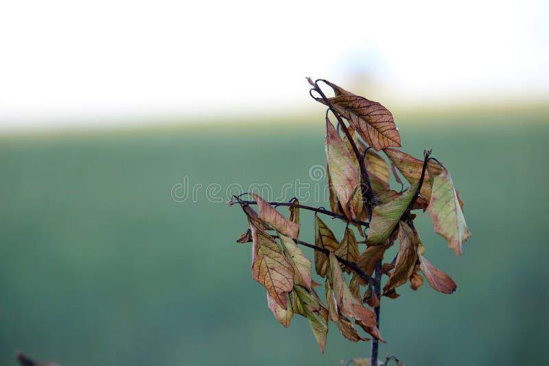 Mała gałąź z nieboszczykiem opuszcza przy jesienią, późne lato fotografia obraz stock
