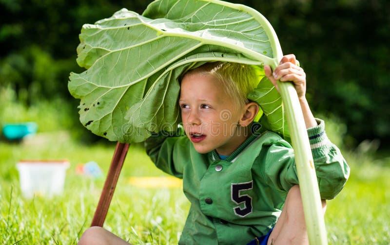 Mała jouful chłopiec z rabarbarem zdjęcia royalty free