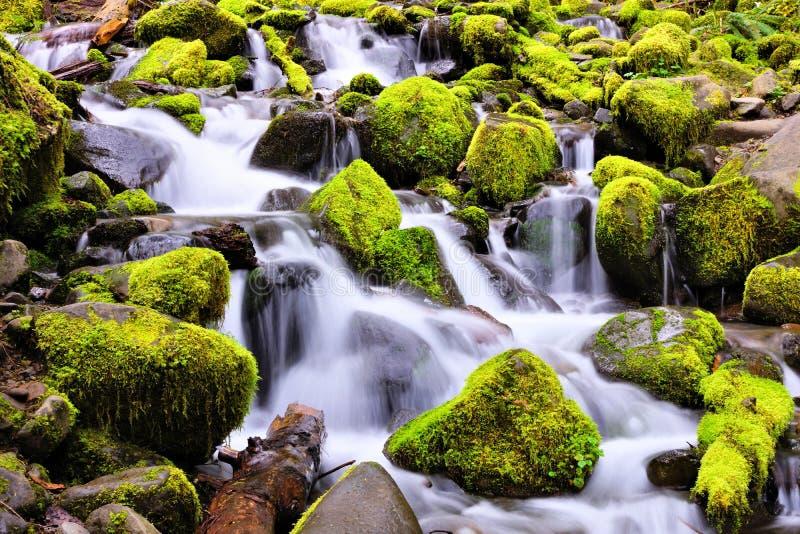 Mała kaskada nad mechatymi skałami, Olimpijski park narodowy, Waszyngton, usa fotografia stock