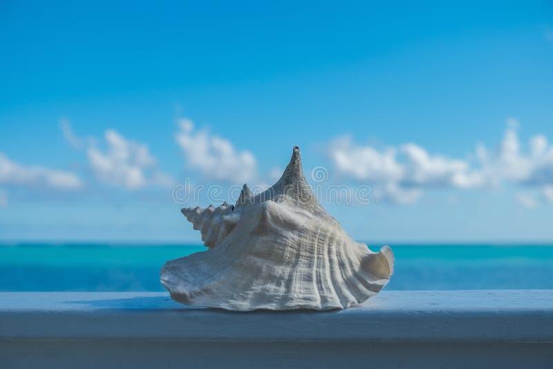 Mała koncha Shell obraz royalty free