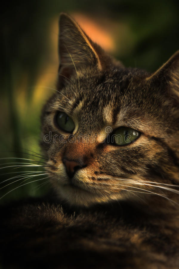 Mała kot bestia obraz stock