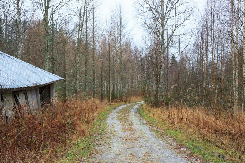Mała lasowa droga w Finland zdjęcia royalty free