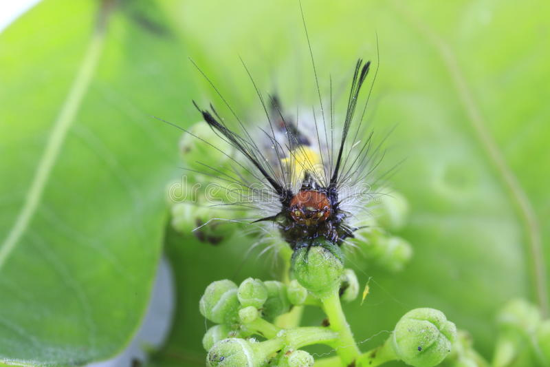 Mała motylia gąsienica na naturalnych kwiatach obraz stock