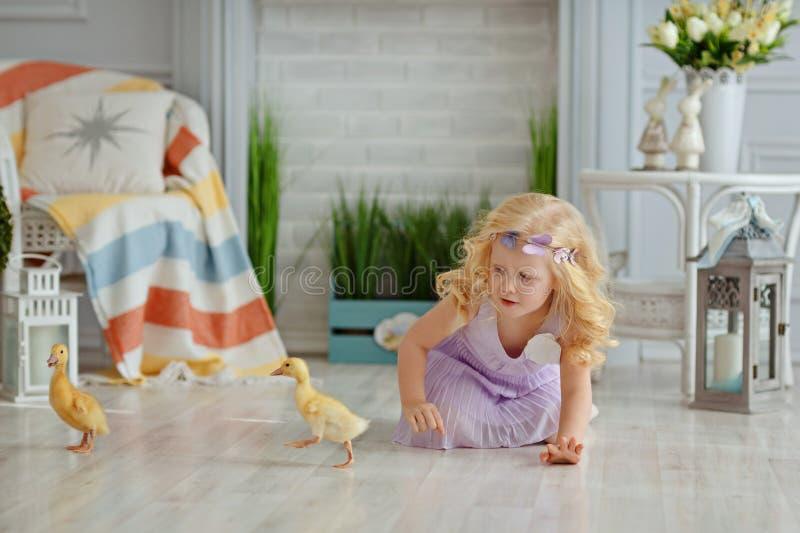 Mała piękna blond dziewczyna próbuje chwytać kaczki w lekkiej stadninie zdjęcia stock