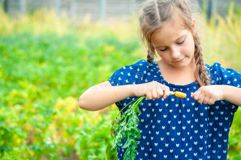 mała piękna dziewczyna uśmiecha się, podnosi i je, marchewki w ogródzie zdjęcie royalty free