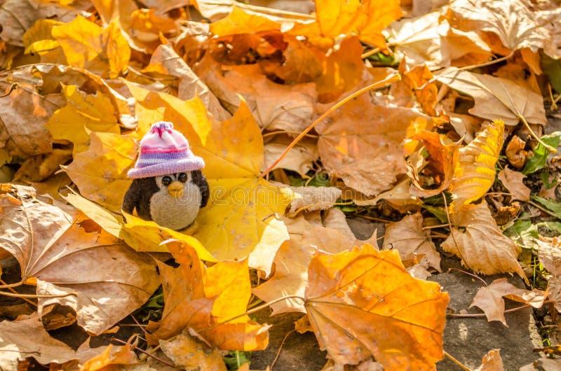 Mała pingwin zabawka na jesień liściu Pingwin w śmiesznym kapeluszowym zbliżeniu obraz stock