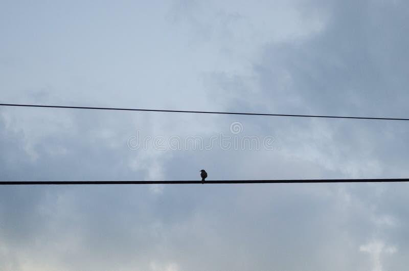 Mała ptasia pozycja na kablu światło na wiejskiej drodze za on tło chmurny niebo fotografia royalty free