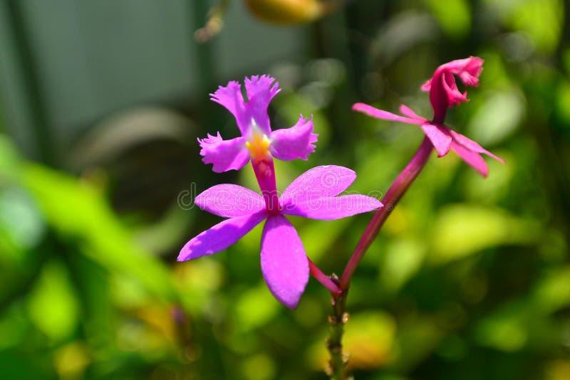 Mała różowa orchidea zdjęcie stock