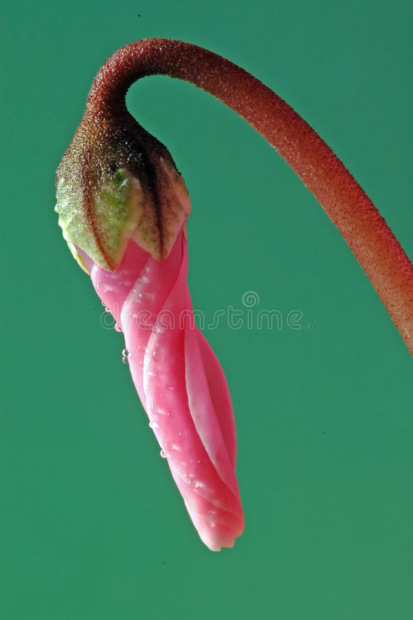 mała różowa rzecz zdjęcia stock