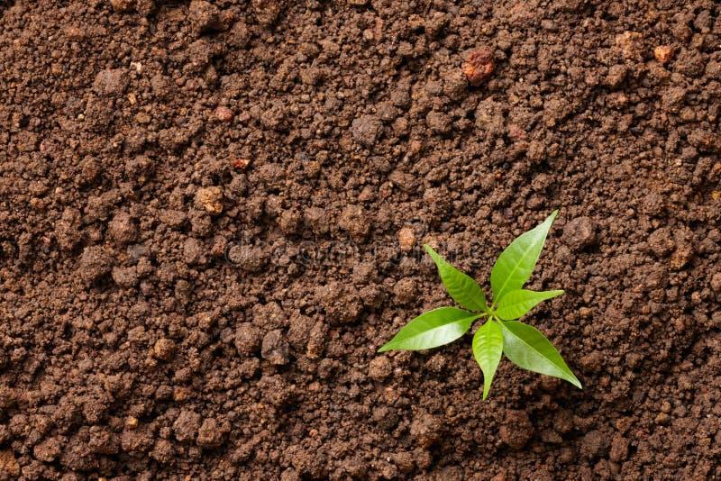 Mała roślina obraz stock