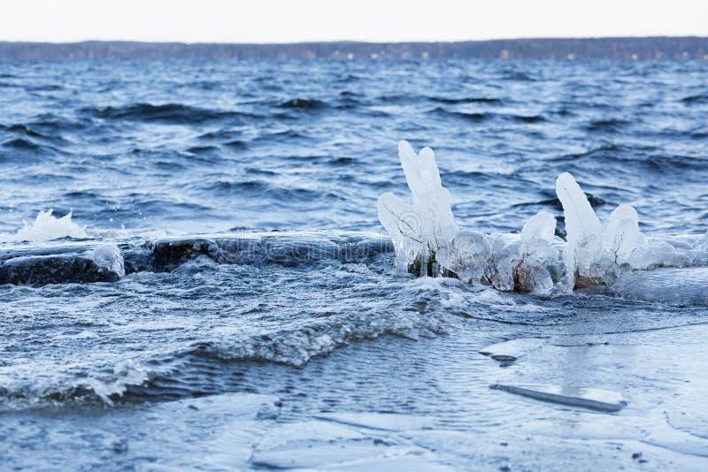 Mała roślina marznąca w jeziornym brzeg przy zimnym zima rankiem fotografia stock