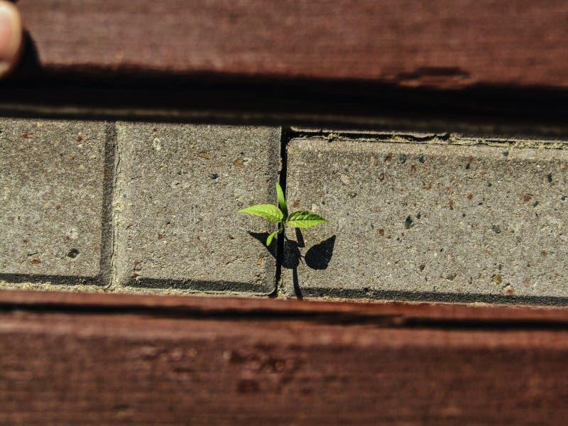 Mała roślina pod ławką zdjęcia stock