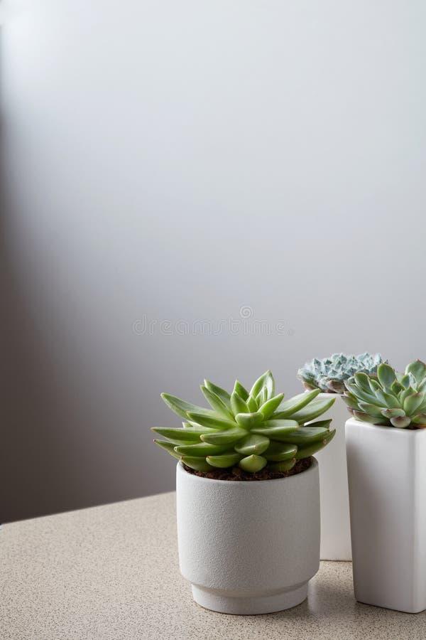 Mała roślina w białym garnku na kamienia stole przeciw neutralny ściany tłu fotografia royalty free
