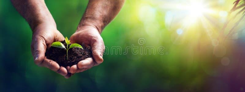 Mała roślina W stary wyga - opieki I ochrony pojęcie zdjęcie royalty free