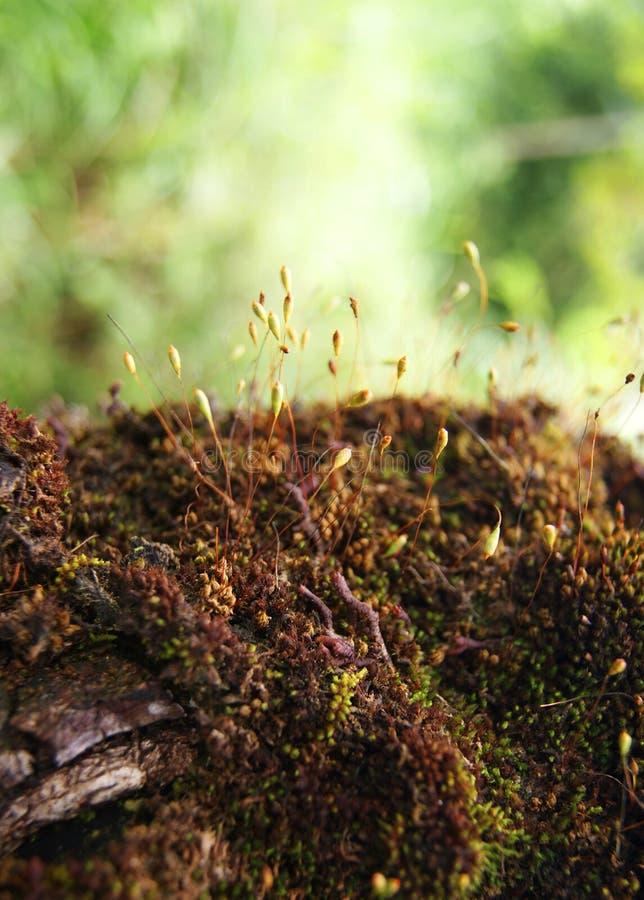 mała roślinnych obrazy royalty free
