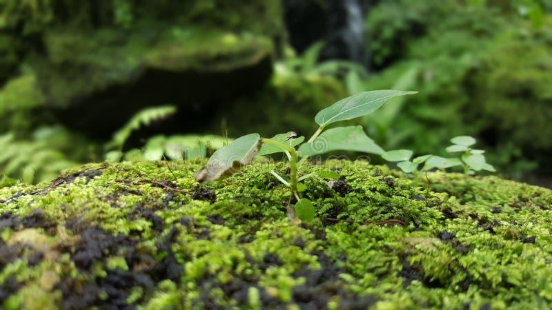 mała roślinnych obraz stock