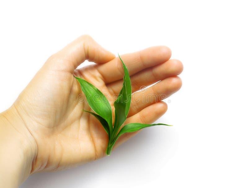 mała roślinnych ręce gospodarstwa zdjęcie stock