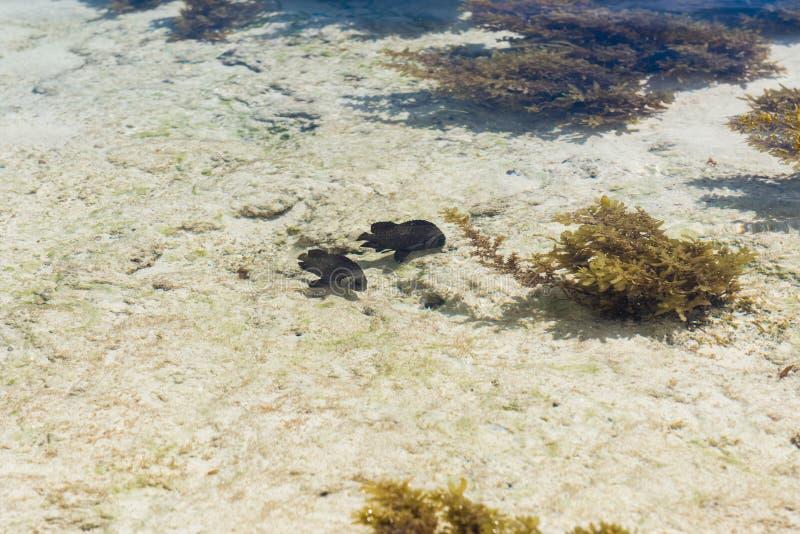 Mała ryba przeciw tłu dno morskie zdjęcia royalty free