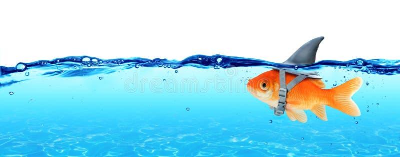 Mała ryba Z ambicjami Duży rekin zdjęcia stock