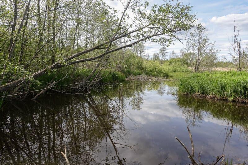 Mała rzeka, drzewa i niebieskie niebo, zdjęcia stock