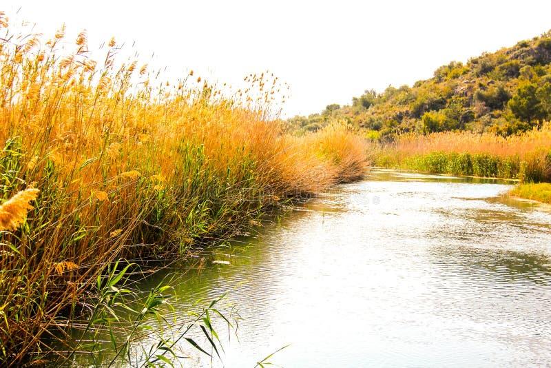 Mała rzeka w bagna natury parku zdjęcia stock