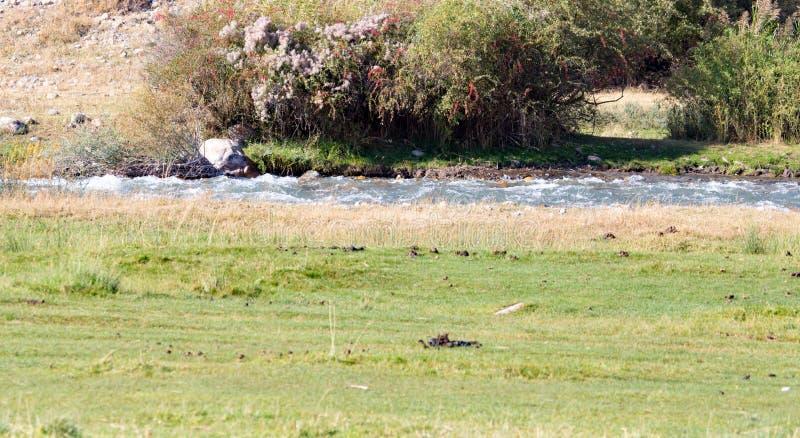 Mała rzeka w naturze obrazy stock