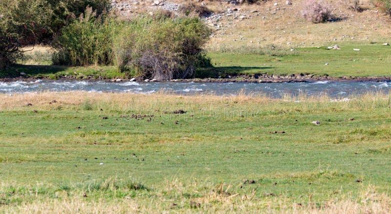 Mała rzeka w naturze fotografia stock