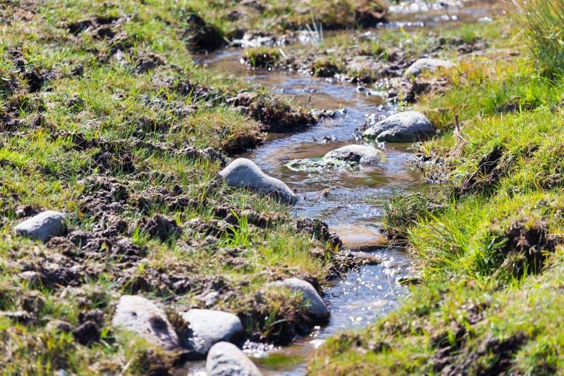 Mała rzeka w naturze fotografia royalty free