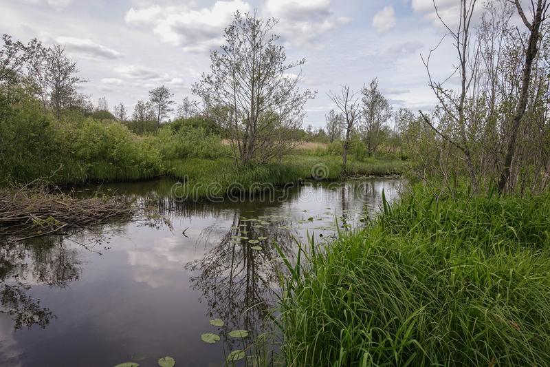 Mała rzeka w wsi i zielona trawa na obich stronach zdjęcia stock