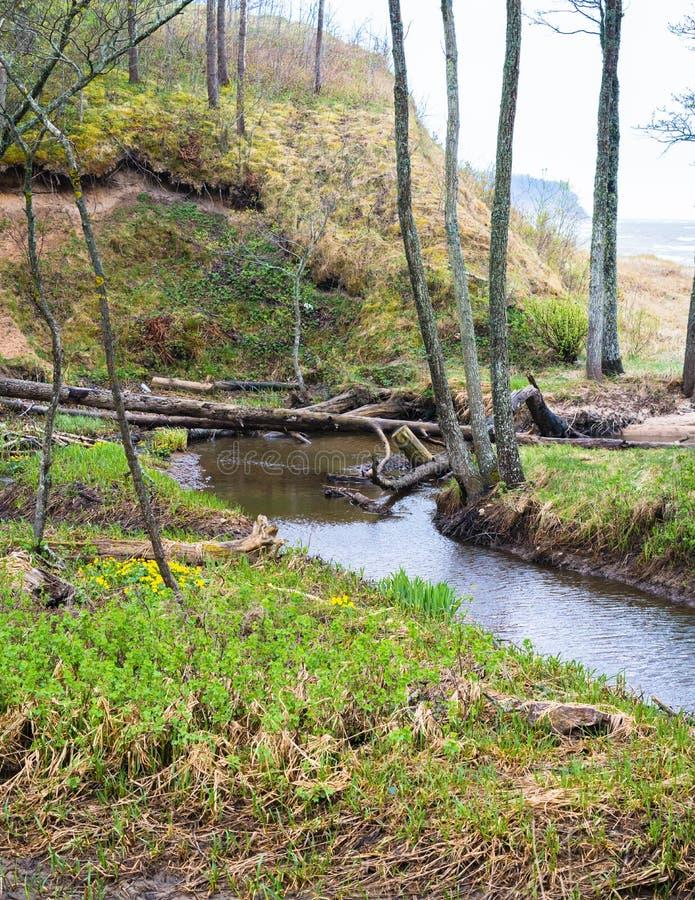 Mała rzeka z wiele roślina korzeniami zdjęcie royalty free